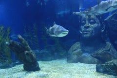 鲨鱼和偶象 免版税图库摄影