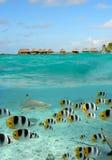 鲨鱼和在Bora Bora的蝴蝶鱼 库存照片
