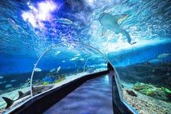 鲨鱼和鱼在海洋公园在马尼拉菲律宾 免版税库存照片