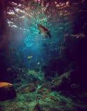 鲨鱼和鱼在水族馆 图库摄影