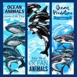 鲨鱼和鲸鱼,海食肉动物横幅集合 向量例证
