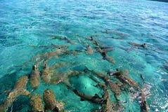 鲨鱼在博拉博拉岛,法属玻里尼西亚 免版税图库摄影