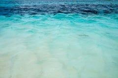 鲨鱼在水中,印度洋 库存照片