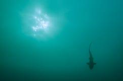 鲨鱼形状 免版税库存照片
