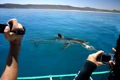 鲨鱼旅游业 免版税库存图片