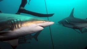 鲨鱼的侧视图 免版税库存照片