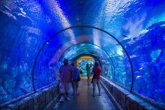 鲨鱼礁石 免版税图库摄影
