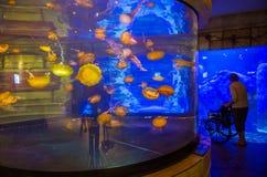 鲨鱼礁石 图库摄影