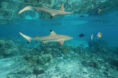鲨鱼被反射在水表面下 库存照片