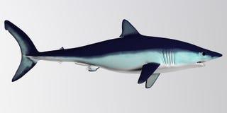鲨鱼边外形 免版税图库摄影