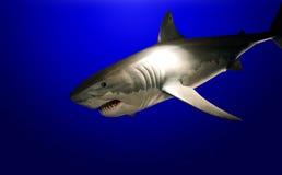 鲨鱼 库存照片