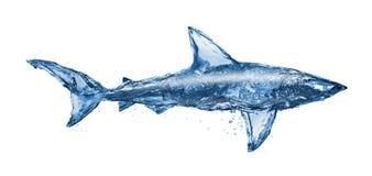 鲨鱼水 免版税库存照片