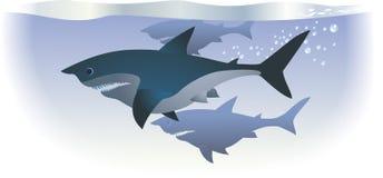 鲨鱼 皇族释放例证