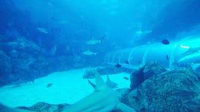 鲨鱼 影视素材