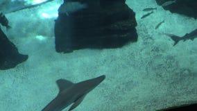 鲨鱼3 影视素材