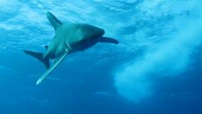 鲨鱼 股票视频