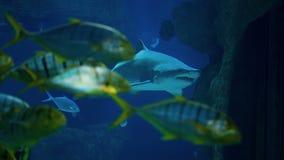 鲨鱼 股票录像
