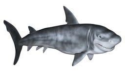 鲨鱼3d 免版税库存图片