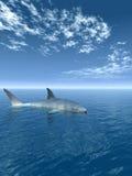 鲨鱼v 免版税图库摄影