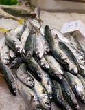 鲭鱼堆 免版税库存图片