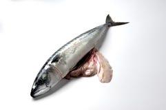 鲭鱼胆量 免版税库存照片