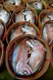 鲭鱼蒸汽 免版税库存照片