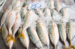 鲭鱼鱼 库存图片