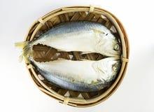 鲭鱼鱼 免版税库存照片