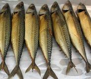 鲭鱼 库存图片
