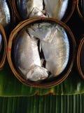 鲭鱼 免版税库存图片