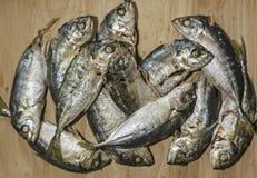 鲭鱼 免版税库存照片