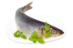 鲱鱼和荷兰芹叶子 免版税库存图片