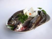 鲱鱼牌照 图库摄影