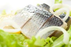 鲱鱼用葱 免版税图库摄影