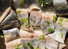 鲱鱼的内圆角 免版税图库摄影