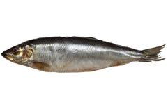 鲱鱼盐溶了 库存照片