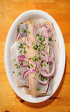 年轻鲱鱼 免版税图库摄影