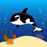 鲸鱼凶手和螃蟹水下与沙子、泡影和珊瑚背景 免版税库存照片