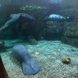 鲸鱼动物园 免版税库存图片