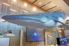 鲸鱼博物馆Museu da Baleia, Canical,马德拉岛 免版税库存照片