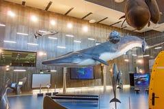 鲸鱼博物馆Museu da Baleia, Canical,马德拉岛 免版税库存图片