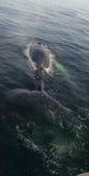 鲸鱼后面 免版税库存照片