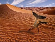 鲸鱼在沙漠 图库摄影