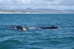 鲸鱼在海洋有山背景 免版税库存照片