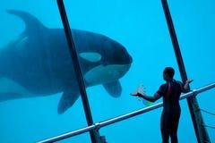 鲸鱼培训人 免版税库存照片