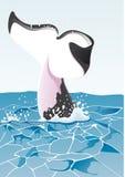 鲸鱼尾巴在海 库存照片