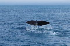 鲸鱼尾巴 免版税库存图片