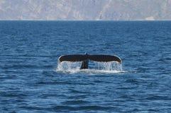 鲸鱼尾巴 库存照片