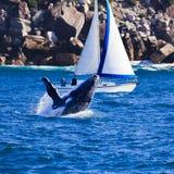 鲸鱼游艇 库存图片