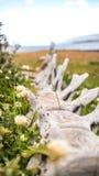 鲸鱼的骨头 免版税图库摄影